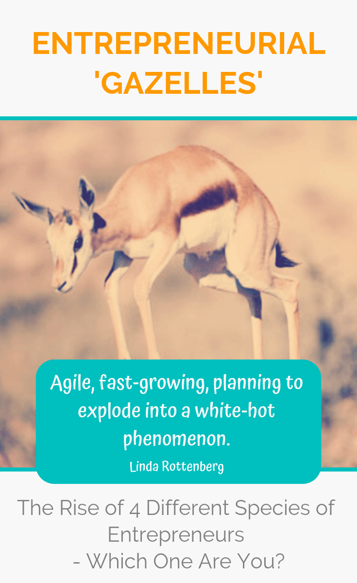 The world of entrepreneurship is changing and 'gazelles' are the special breed of high-growth, rapid change animals who dare to take on the world and create massive breakthroughs in the way we do things. Read on to discover which species you belong to! #entrepreneur #entrepreneurship #ladyboss #ladybosses #womeninbusiness #liveyourpassion #followyourheart #liveyourdream #passion #solopreneur #entrepreneurlife #entrepreneurial #entrepreneurmindset #success #successmindset #ladybosslife #worksmarter #changemakers #heartcentered #heartcentred #worksmarternotharder #laptoplifestyle