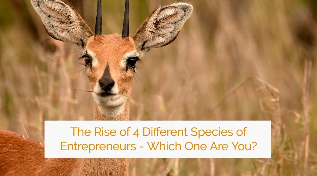 The Rise of 4 Different Species of Entrepreneurs – Which One Are You?