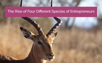The Rise of 4 Different Species of Entrepreneurs. Which One Are You?